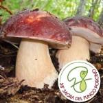 38° Fiera del Fungo di Borgotaro foto Borchure 2013