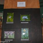 Fiera Fungo Albareto 08-09-2013 (757) Concorso fotografico