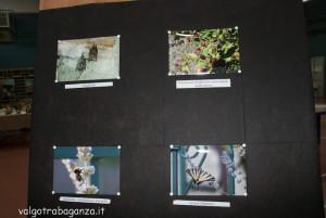 Fiera Fungo Albareto 08-09-2013 (761) Concorso fotografico