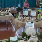 Fiera Fungo Albareto 08-09-2013 (934) Mostra Micologica