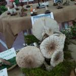 Fiera Fungo Albareto 08-09-2013 (936) Mostra Micologica