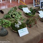 Fiera Fungo Albareto 08-09-2013 (937) Mostra Micologica