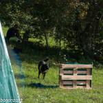 Fiera Fungo Albareto 2013-09-07 Raduno Cinofilo (387)