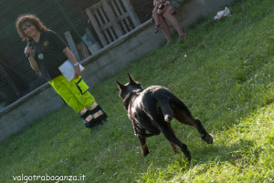 Fiera Fungo Albareto 2013-09-07 Raduno Cinofilo (393) Protezione Civile