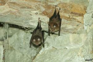 Terzo premio Desy Grilli - Pipistrelli
