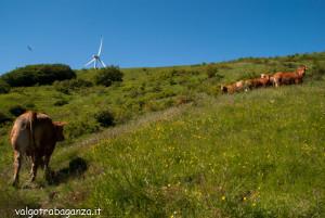 2013-06-11 (167) Passo Cappelletta mucche
