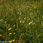 2013-06-11 (180) Passo Cappelletta fioriture