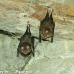 Concorso 2013 Desy Grilli Pipistrelli Terzo classificato