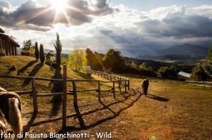 Concorso 2013 Fausto Bianchinotti Wild