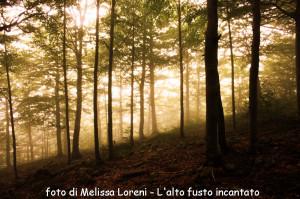 Concorso 2013 Melissa Loreni L'alto fusto incantato