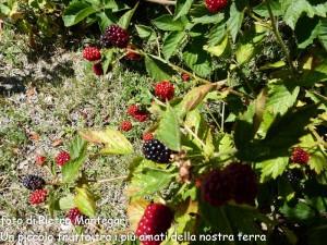 Concorso 2013 Pietro Mantegari Un piccolo frutto