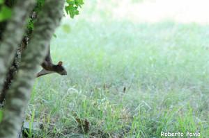 Fotofavolaracconto scoiattolo valgotrabaganza