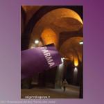 21-10-2013 Parma color Malva (258)