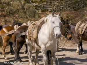 Mulattiere Monte Penna di Roberto Pavio marzo 2007 (34) basto