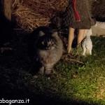 Presepe - Borgotaro 13-12-2013  (23) con gatto