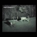 Cervo al pascolo 15-12-2013 (110) video