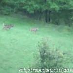 Lupo Albareto 15-09-2013 video (22)