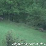 Lupo Albareto 15-09-2013 video (39)