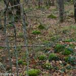Camminata Groppo - Montegroppo (105)