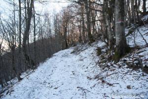 Monte Gottero di Valentina Bruschi 25-01-2014 (100) foresta