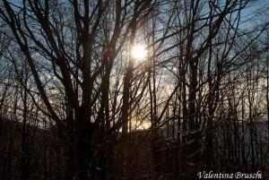 Monte Gottero di Valentina Bruschi 25-01-2014 (103) foresta