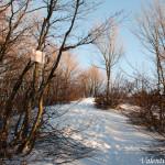 Monte Gottero di Valentina Bruschi 25-01-2014 (116) sentiero