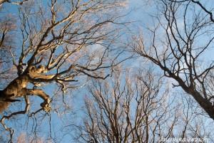 Monte Gottero di Valentina Bruschi 25-01-2014 (117) alberi