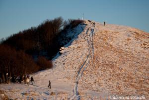 Monte Gottero di Valentina Bruschi 25-01-2014 (127) boschetto