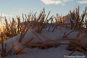 Monte Gottero di Valentina Bruschi 25-01-2014 (135) erba fina