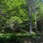 Val Gotra (10) natura