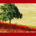 """Auguri valgotrabaganza.it - Buon compleanno """"blog""""! - 21 marzo 2014"""