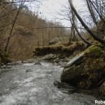 Setterone  Bedonia di Roberto Pavio 072 torrente