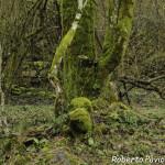 31 2014-03-23 mulino di tarsogno (52)-2
