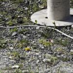 (340) Berceto esplosione 2014-04-10