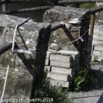 (343) Berceto esplosione 2014-04-10