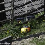 (349) Berceto esplosione 2014-04-10