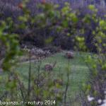 Natura 2014-03-29 Val  (15)