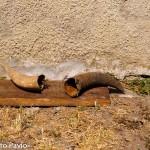 cudà contenitore della cote realizzato con un corno di bue  (1)
