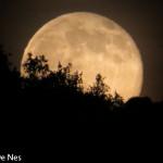 Luna piena color miele di Ornella De Nes (1)