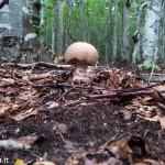 andar per funghi Val Taro 03-08-2014 (112)