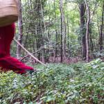 andar per funghi Val Taro 03-08-2014 (119)