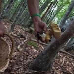 andar per funghi Val Taro 03-08-2014 (134)