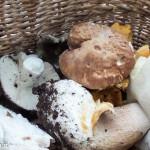 andar per funghi Val Taro 03-08-2014 (143)