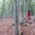andar per funghi Val Taro 03-08-2014 (151)