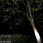 Cervo da video Solignano Val Taro (2)