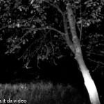 Cervo da video Solignano Val Taro B N