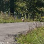 Fagiano Albareto (19) strada