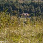 Fagiano Albareto (21) volo