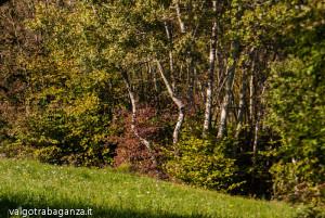 Val Gotra Autunno 2014 (123) foliage