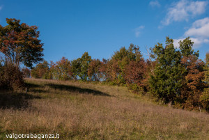Val Gotra Autunno 2014 (158) foliage